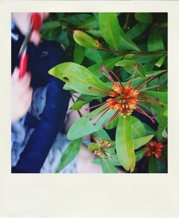 riley cutting flowers