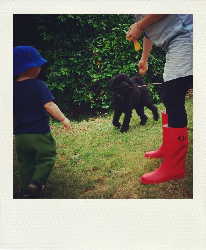 playing fetch in my red gumboots