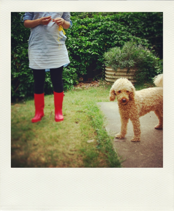 red gumboots, crochet, poodle